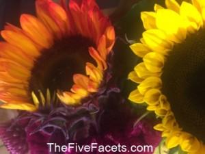 Fall Sunflowers at Wegmans