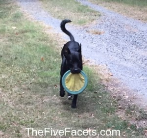 Odie Playing Frisbie