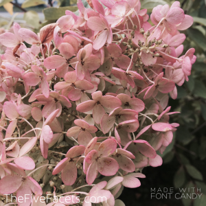 Pink Fall Flowers