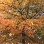 Fall Foliage HappyHappens